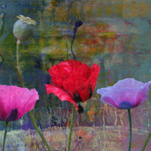 Wallflowers A variety of poppies from different Oregon gardens. The background is a combination of a monotype print, handmade textured paper, and a photo of a piece of shale. I really love poppies, as many of you already know. Photographs, handmade papers, and monotype print — digitally layered and manipulated.